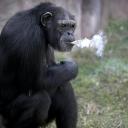 تصویر ° Bad Monkey °