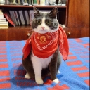 تصویر گربه منچستری 😎