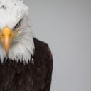 تصویر عقاب مادرید(تعلیق)