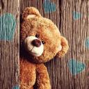 تصویر teddy bear