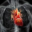 تصویر heart13 ManU 13