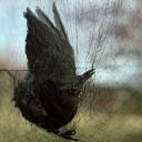 تصویر Black crow