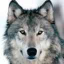 تصویر aloen wolf