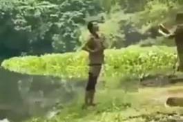 خوردن دختر توسط تمساح