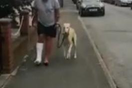 همدردی یک سگ بخاطر پای صدمه دیده صاحبش + ویدیو