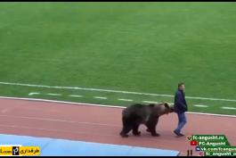 روسیه - خرس قهوه ای