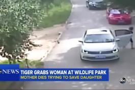 حمله ترسناک ببر بنگال به زنی در پارک!