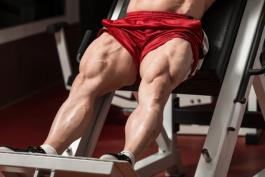 عضلات چهار سر ران-Quadriceps femoris muscle