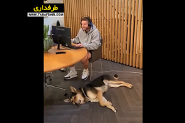 ویدیو؛ تاثیرات قرنطینه خانگی بر نیکلاس بنتنر و سگش