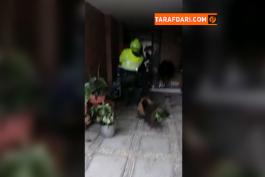 لحظه دستگیری فردی گوارین هافبک 33 ساله سابق تیم ملی کلمبیا و باشگاه اینتر توسط پلیس / ویدیو